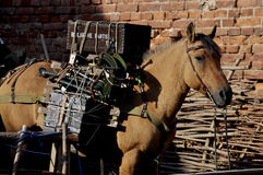 Packhorse. Mule loaded with military equipment Stock Image
