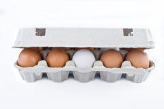 Packing of chicken eggs Royalty Free Stock Image