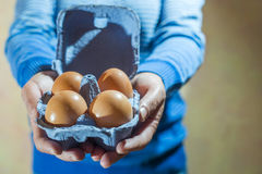 Packing eggs Stock Image