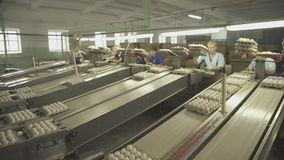 Packing eggs in boxes with help of women workers on assembly line.