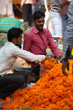 Packing Flowers. Pune, India - October 21, 2015: A streetside flower seller packing Marigold flowers for a customer on the eve of Dassera festival in India in Stock Images