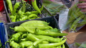 Packing fresh organic produce peppers stock footage