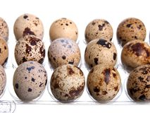 Packing quail eggs Stock Images