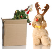 Packing up christmas stock photo