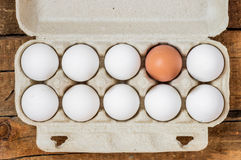 Packing white eggs and one brown Royalty Free Stock Photos