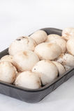 Packing white mushrooms in a plastic black box Stock Image