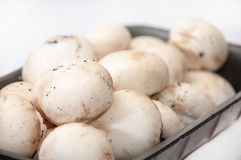 Packing white mushrooms in a plastic black box Stock Images