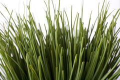 Packs of chives. Close up of packs of chives Stock Image