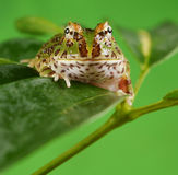 pacman的青蛙 库存照片