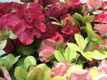 Pacote da flor Fotografia de Stock Royalty Free