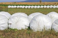 Pacote da grama no campo Fotos de Stock Royalty Free