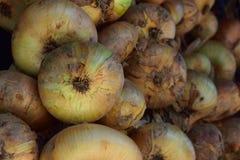 Pacote de cebolas Fotos de Stock Royalty Free