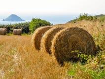 Pacote de feno da palha no campo após a colheita Fotos de Stock Royalty Free