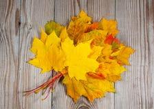 Pacote de folhas de bordo na madeira Imagem de Stock Royalty Free