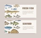 Pacote de moldes da bandeira da Web com os peixes que vivem no mar, o oceano ou lagoas e lugar de água doce para o texto Colorido ilustração stock
