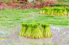 Pacote do arroz Fotografia de Stock Royalty Free