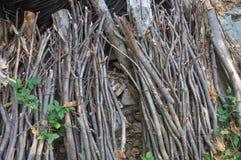 pacote do fagot de ramos imagem de stock royalty free