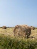 Pacote do feno no campo cultivado Fotografia de Stock Royalty Free