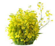 Pacote do Rapeseed imagens de stock royalty free