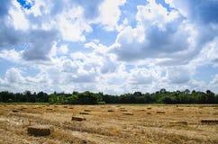 Pacote pressionado da palha à esquerda da colheita que encontra-se em um campo com s azul Imagem de Stock