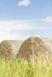 Pacotes da ensilagem na paisagem do verão Imagens de Stock Royalty Free