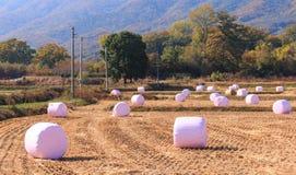 pacotes da ensilagem da palha envolvidos no plástico Foto de Stock