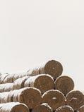 Pacotes da forragem da palha no inverno Imagem de Stock Royalty Free