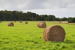 Pacotes da grama seca no campo verde, Saint Cado, France Imagem de Stock Royalty Free