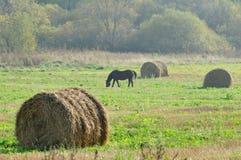 Pacotes da palha e cavalo da pastagem no campo Fotografia de Stock Royalty Free