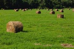 Pacotes da palha em um campo Imagem de Stock