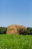 Pacotes da palha em um campo Foto de Stock