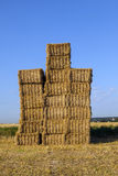Pacotes da palha em um campo após a colheita fresca sob o céu azul Imagens de Stock Royalty Free