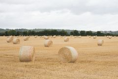 Pacotes da palha em uns pacotes de feno do campo do verão Foto de Stock Royalty Free