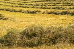 Pacotes da palha nas fileiras em um campo Fotografia de Stock