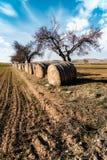 Pacotes da palha no campo Foto de Stock
