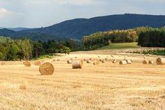 Pacotes da palha no campo no dia de verão da floresta na exploração agrícola em República Checa Milho da colheita Montanhas de Mo fotografia de stock