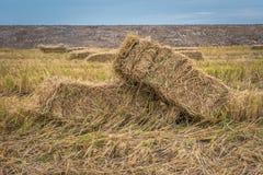 Pacotes da palha no campo do arroz Fotografia de Stock