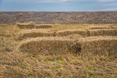 Pacotes da palha no campo do arroz Fotos de Stock Royalty Free
