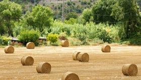 Pacotes da palha no campo do cultivo Imagens de Stock