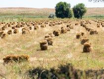 Pacotes da palha no campo na natureza Imagens de Stock
