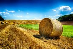 Pacotes de feno dourados no campo agrícola Fotografia de Stock Royalty Free