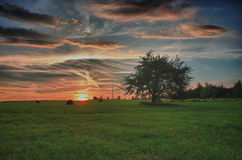 Pacotes de feno e árvore só em um prado contra o céu bonito com as nuvens no por do sol Fotos de Stock Royalty Free