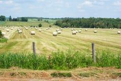 Pacotes de feno em um campo do ouro da grama Foto de Stock Royalty Free