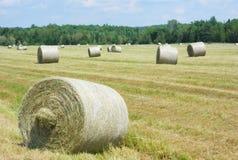 Pacotes de feno em um campo do ouro da grama Foto de Stock