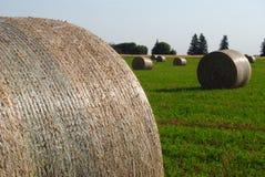 Pacotes de feno envolvidos em Manitoba Imagem de Stock