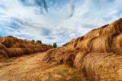 Pacotes de feno no campo após a colheita Imagens de Stock