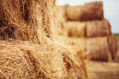 Pacotes de feno no campo após a colheita Fotos de Stock Royalty Free