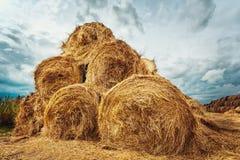 Pacotes de feno no campo após a colheita Imagens de Stock Royalty Free