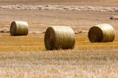 Pacotes de feno no campo após a colheita, Polônia Foto de Stock