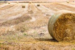 Pacotes de feno no campo após a colheita, Polônia Fotografia de Stock